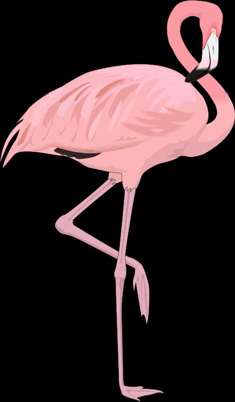 Free vector bird graphic. Flamingo clipart group