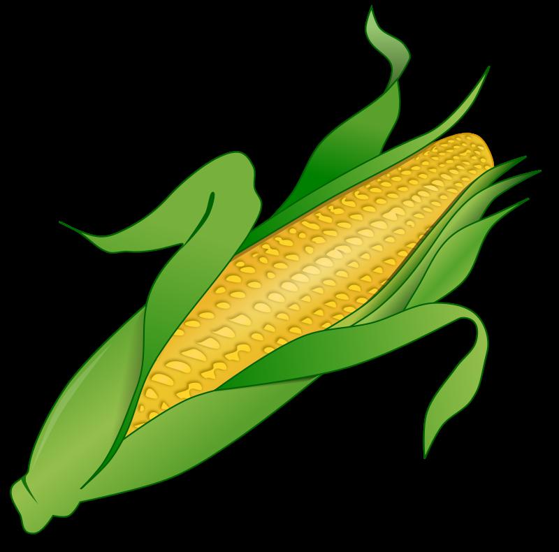 Cornfield ear corn free. Grain clipart black and white