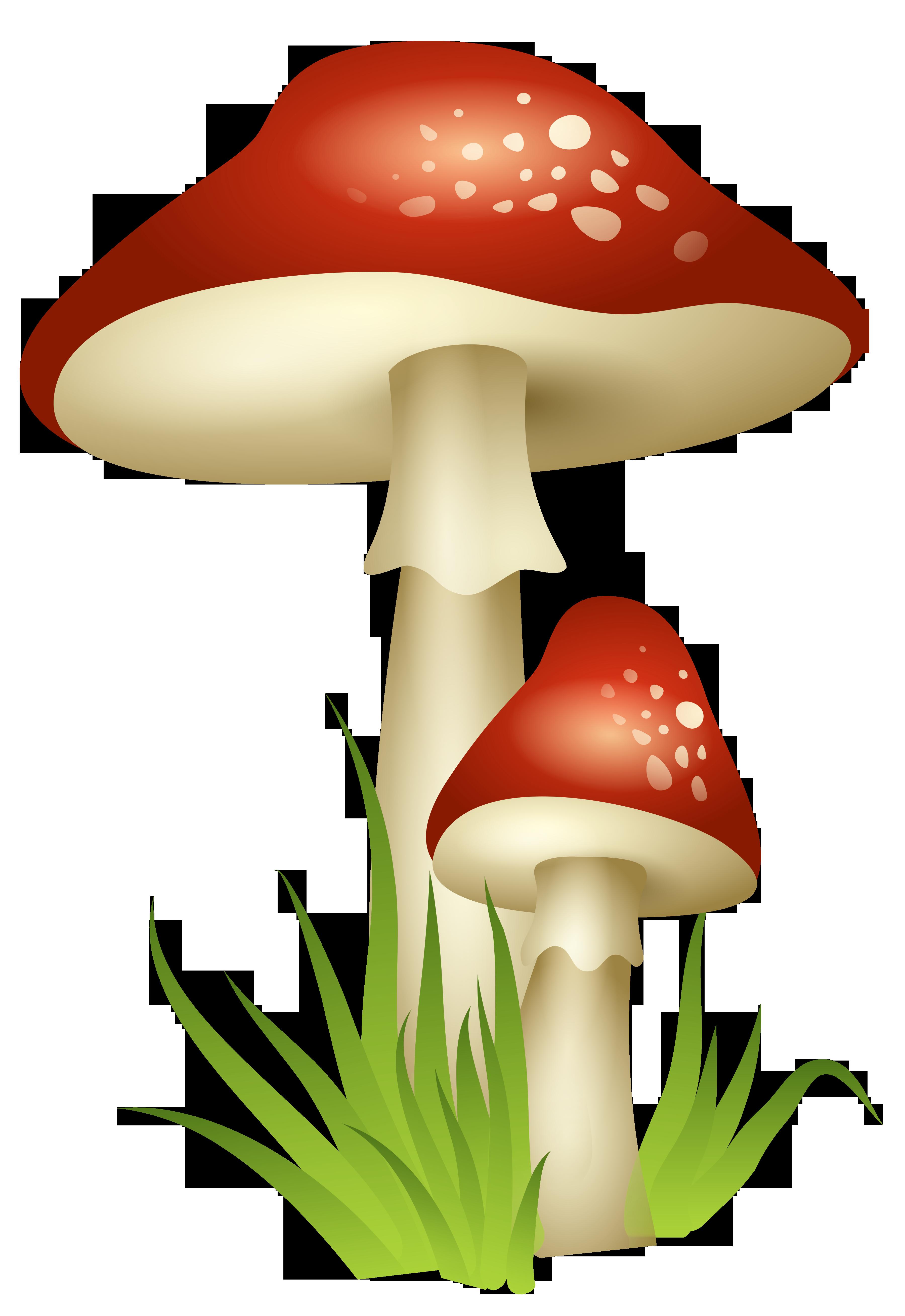 Mushrooms transparent png picture. Landscape clipart fairy