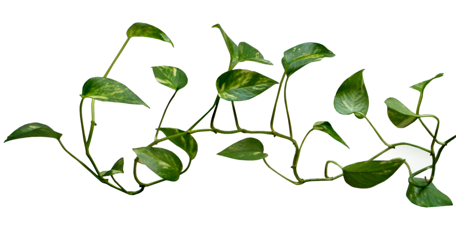 Money clipart money tree.  collection of plant