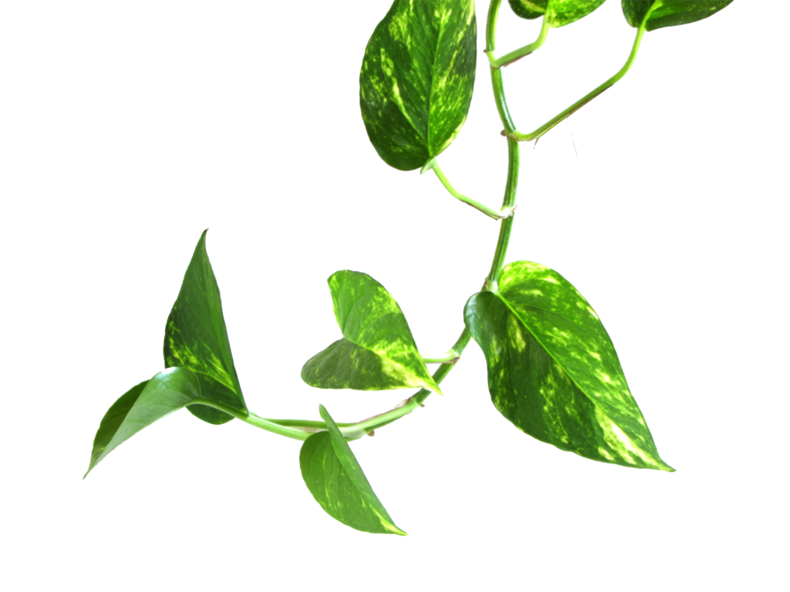 collection of plant. Money clipart money tree
