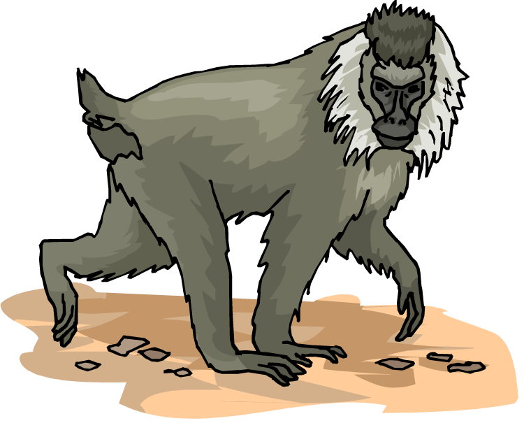 Free large. Monkey clipart baboon