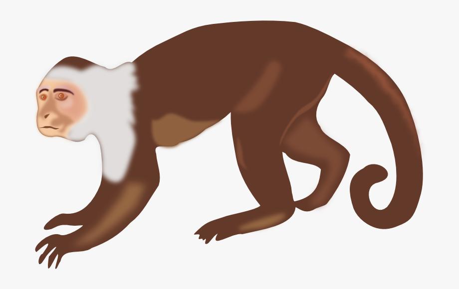 Monkey clipart capuchin monkey. Download clip art transparent