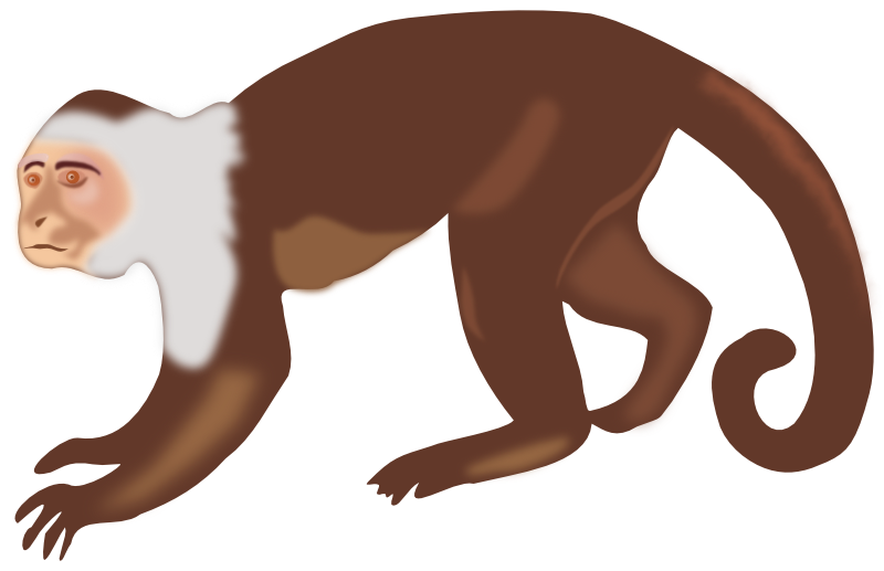White headed capuchin clip. Tree clipart monkey