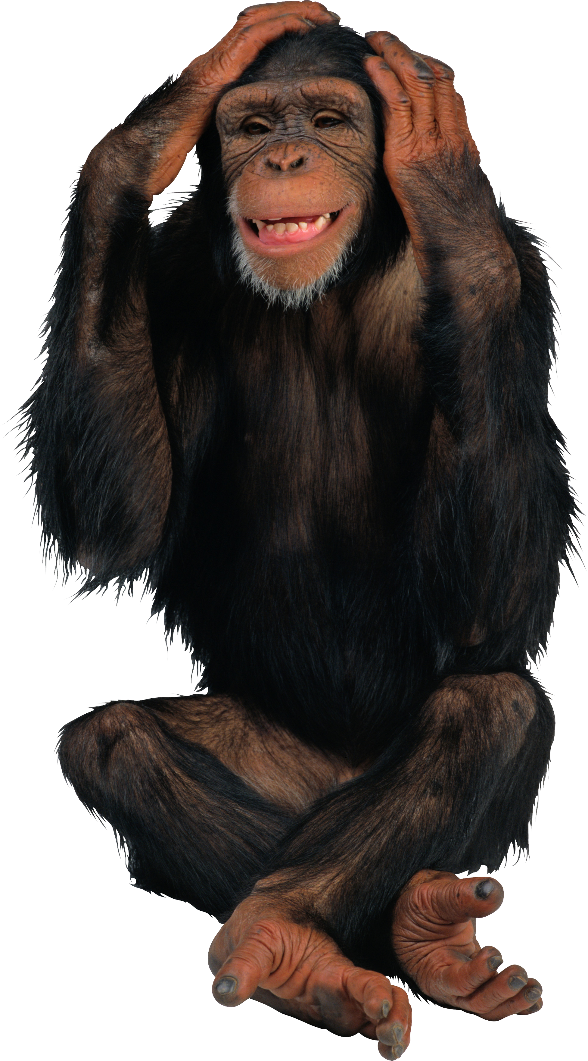 Tooth clipart monkey. Png animal pinterest