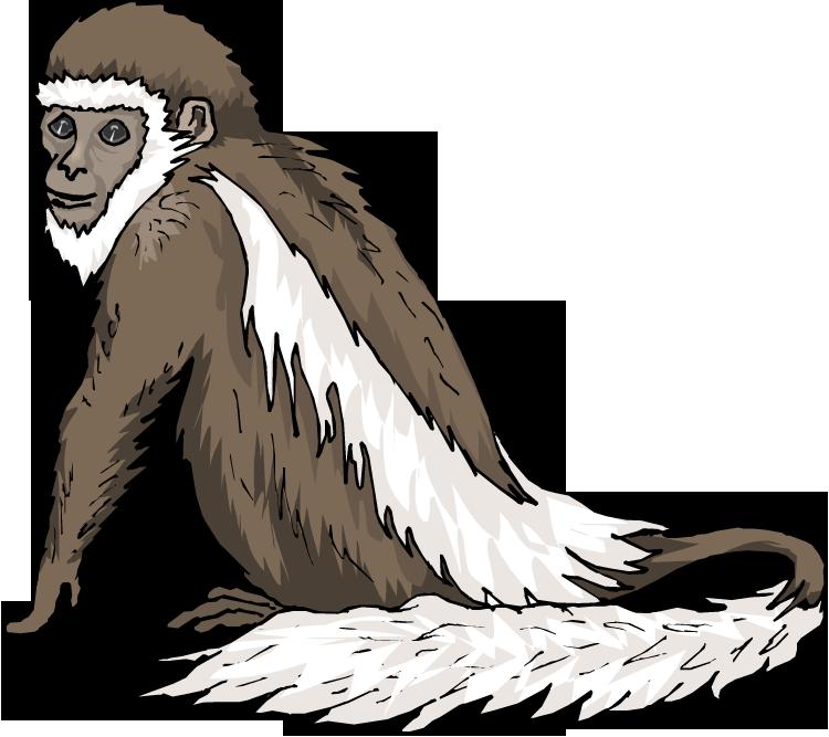 Free. Monkeys clipart spider monkey