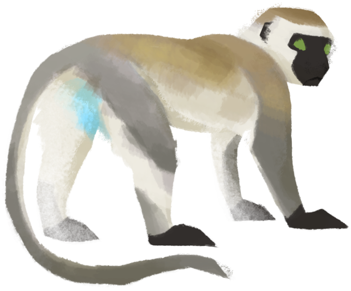Clipart monkey vervet monkey.  collection of drawing