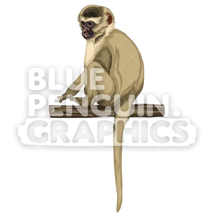 Clipart monkey vervet monkey. Version vector illustration