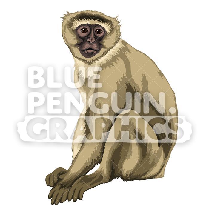 Version vector illustration . Clipart monkey vervet monkey
