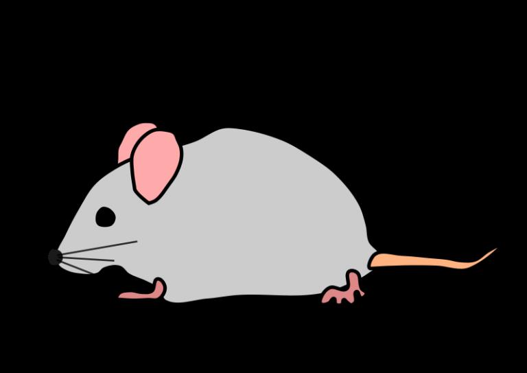 Free panda images school. Clipart mouse cute mouse