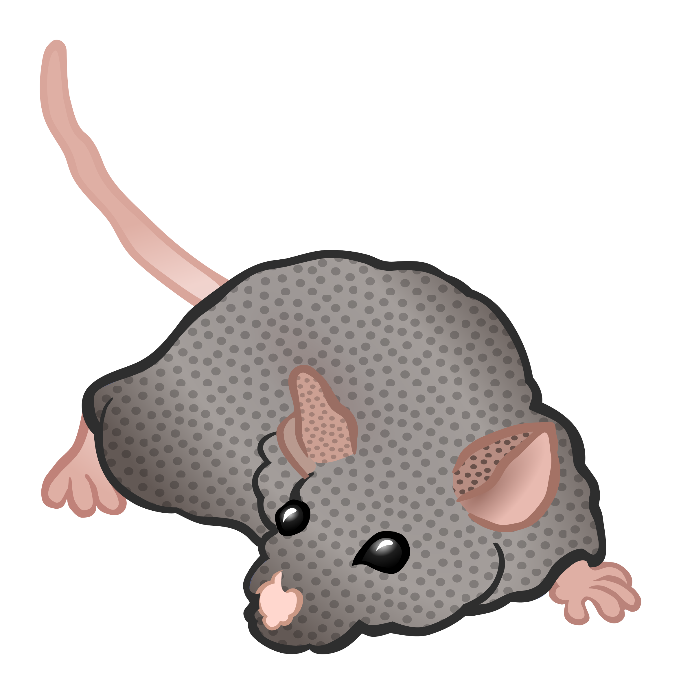 Clipart mouse gray mouse. Coloured big image png