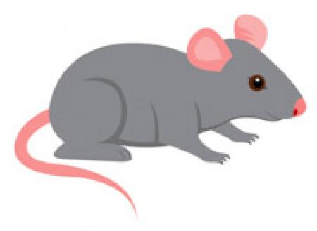 Clipart mouse gray mouse. Mice free download on