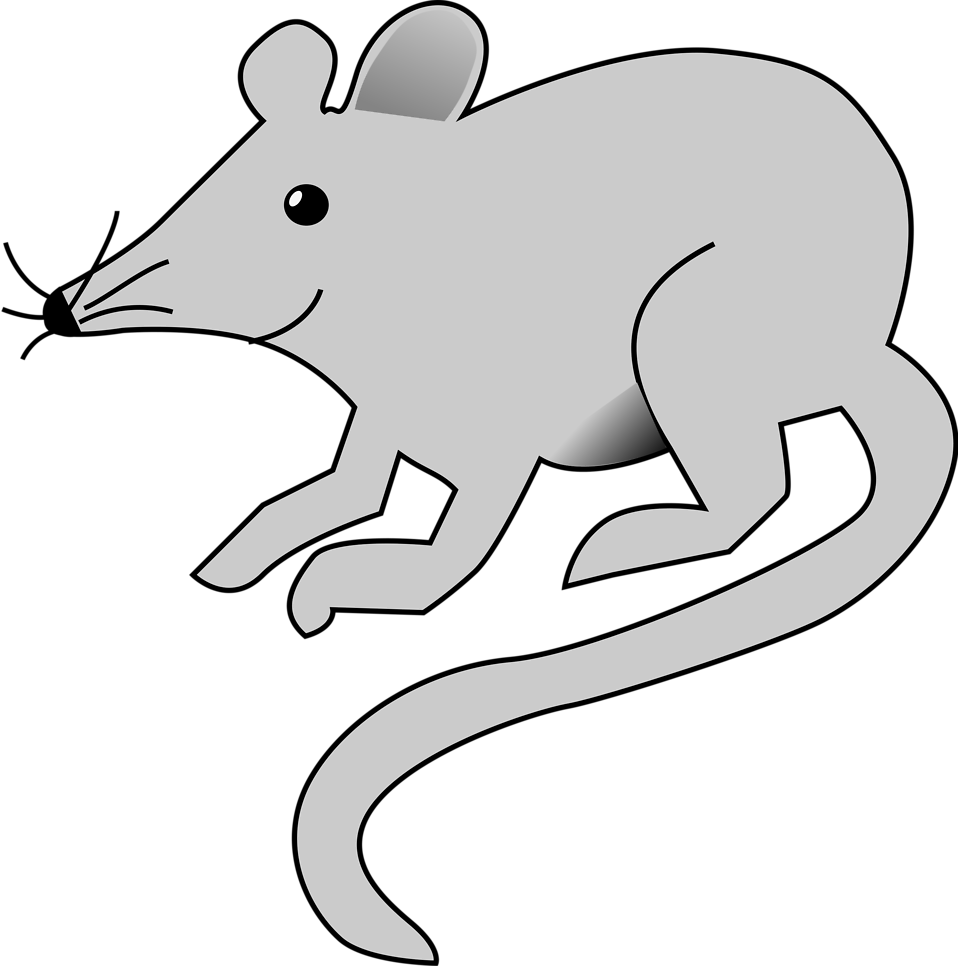 collection of mouse. Rat clipart clear background