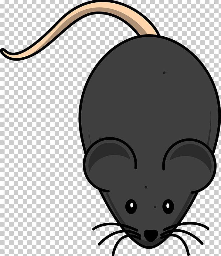 Clipart mouse laboratory. Rat png animals artwork