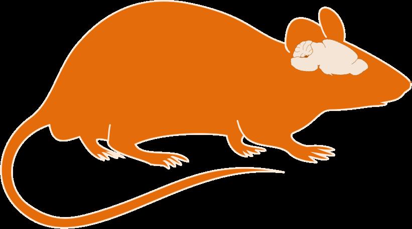 Animal models title brain. Clipart mouse orange