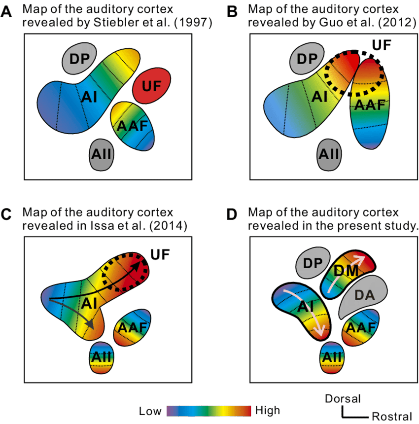 Schematic maps of the. Mice clipart quiet mouse