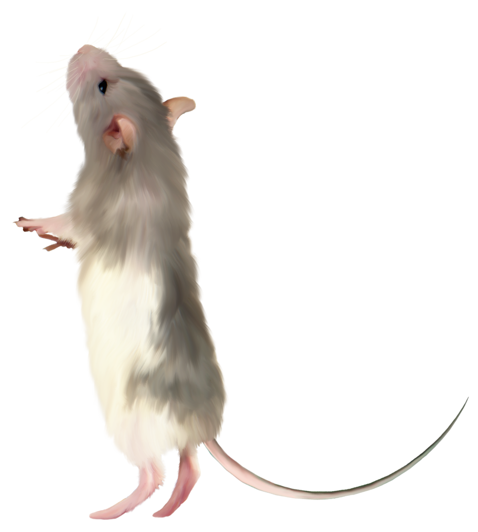 Mouse high quality png. Clipart rat clear background