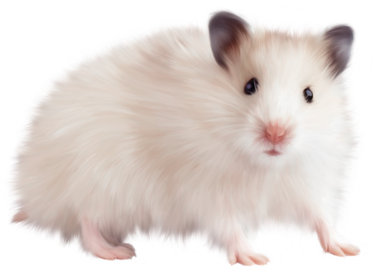 Hamster clipart transparent background. Mouse png picture gallery