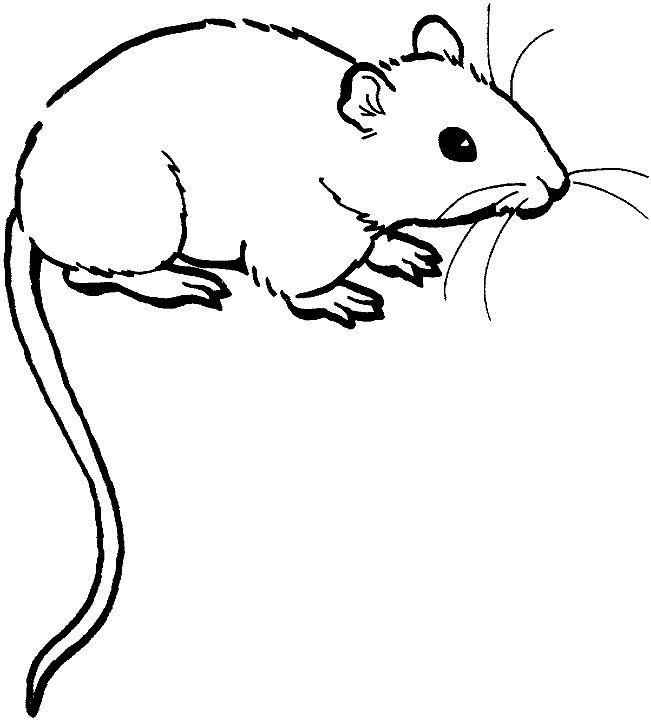 Mouse realistic clip art. Clipart rat jpeg