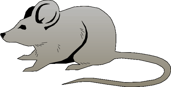 Mice clipart realistic. Free pictures of mouse