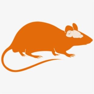 Epilepsy epileptic seizure brain. Mice clipart research