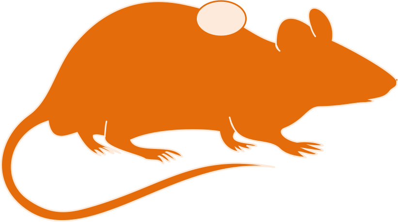Animal models title syngeneic. Mice clipart research