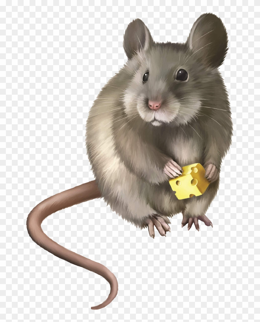 Mice electronic trap png. Clipart mouse rodent
