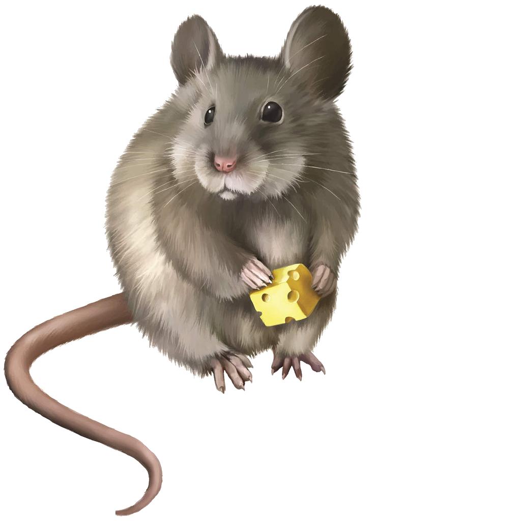 Rat mouse rodent clip. Hamster clipart gerbil