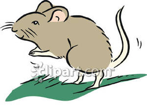 Clipart mouse standing. On hind legs royalty