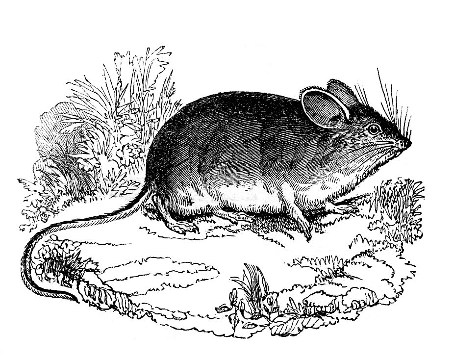 Mouse clipart vintage. Black and white clip