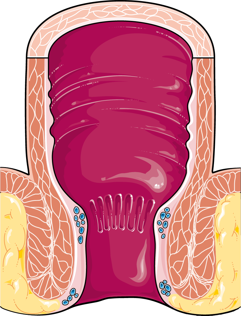 Clipart mouth digestive system mouth. Rectum servier medical art
