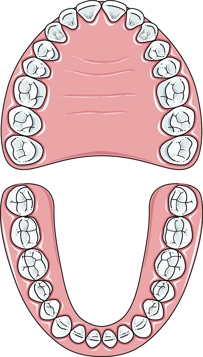 Free Tooth Clipart, Download Free Clip Art, Free Clip Art on Clipart Library