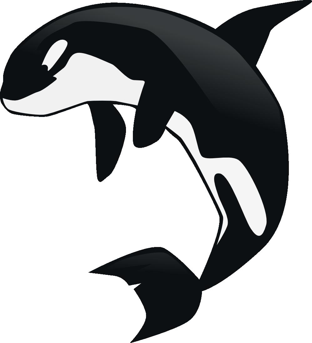Dolphin clipart vector. Killer whale animated pencil
