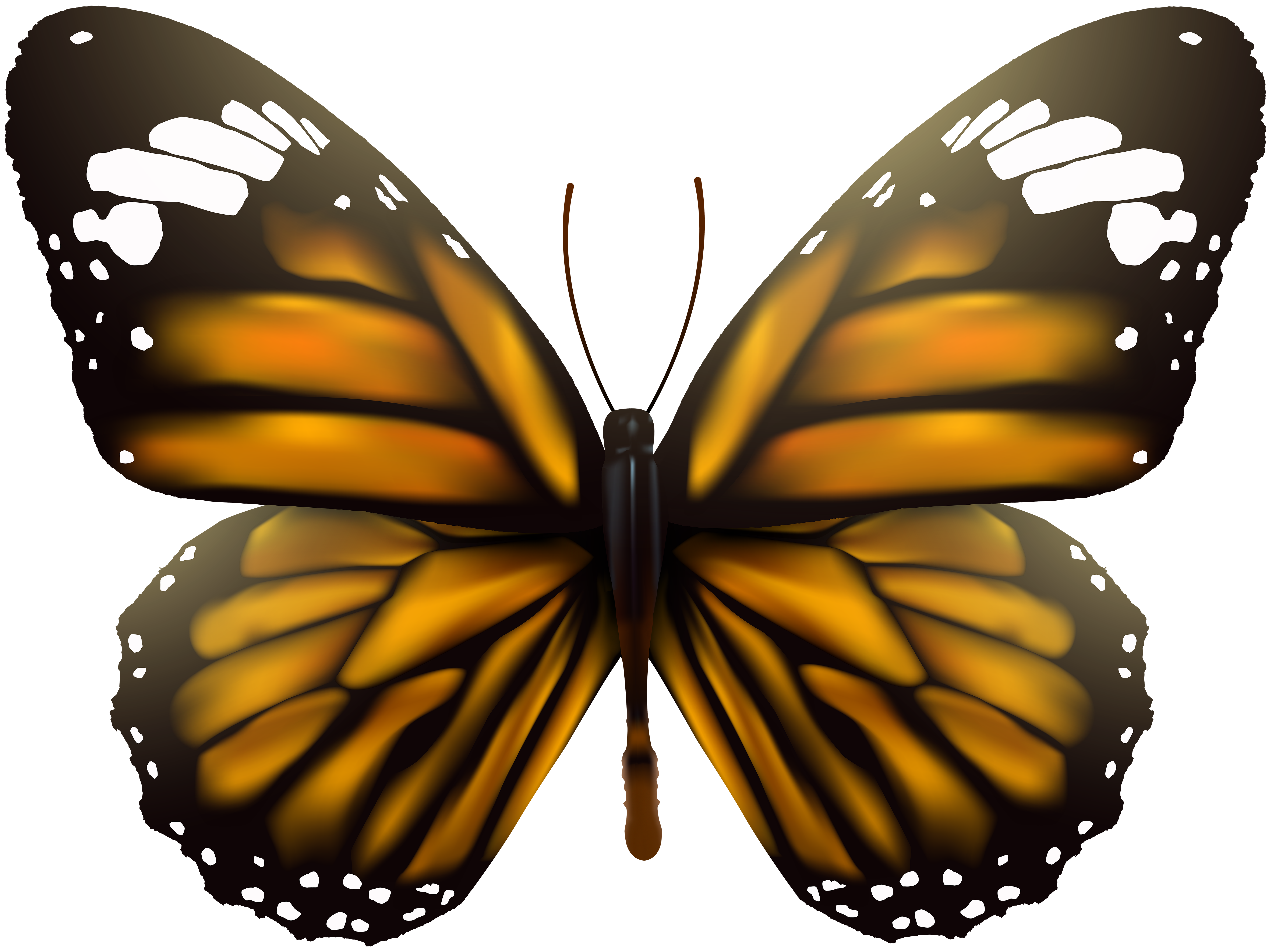 Transparent clip art image. Moth clipart brown butterfly