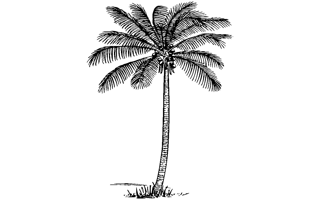 Tall clipart coconut tree. Group black and white