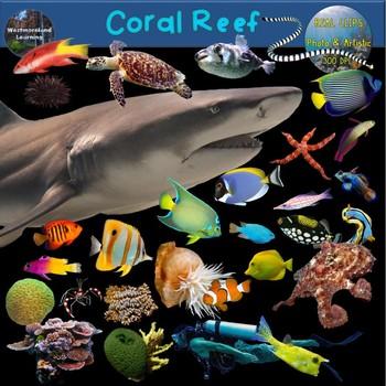 clipart ocean coral reef ecosystem