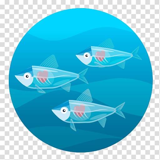 Comomola tap porpoise animal. Clipart ocean oceano