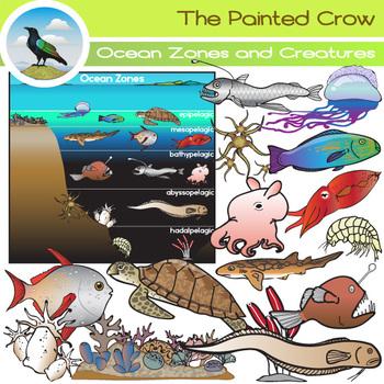 Ocean clipart oceanography. Zones and creatures clip