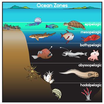 Zones and creatures clip. Ocean clipart oceanography