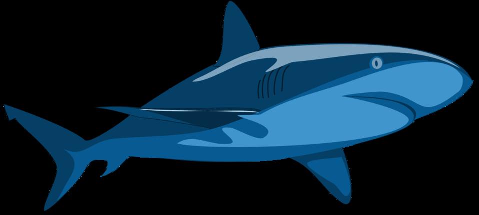 Public domain clip art. Clipart shark jaw