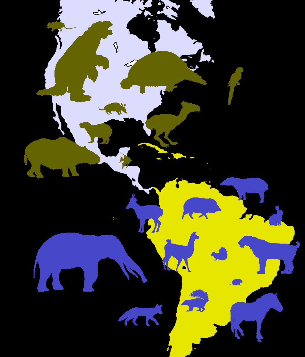 Central american seaway wikipedia. Clipart turtle biotic