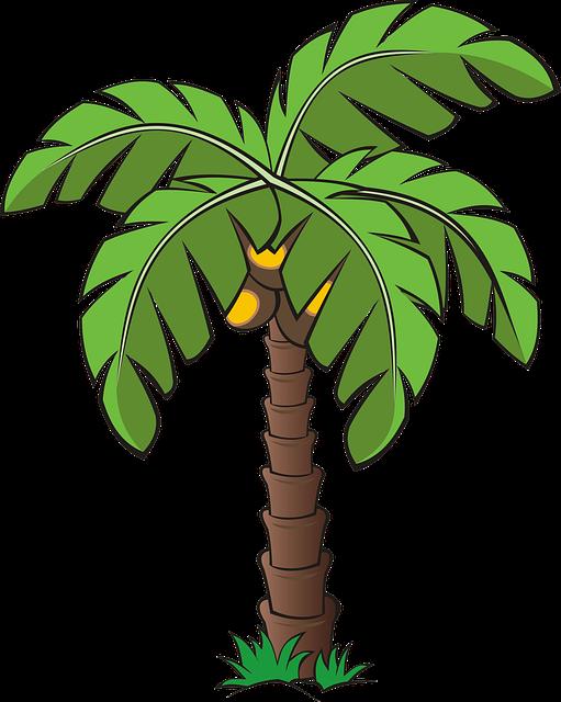 Free photo tree palm. Plants clipart vegetation