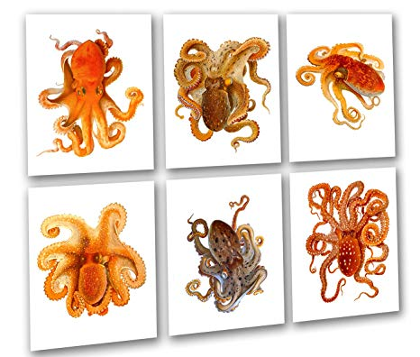 Clipart octopus beach theme. Wall art decor prints