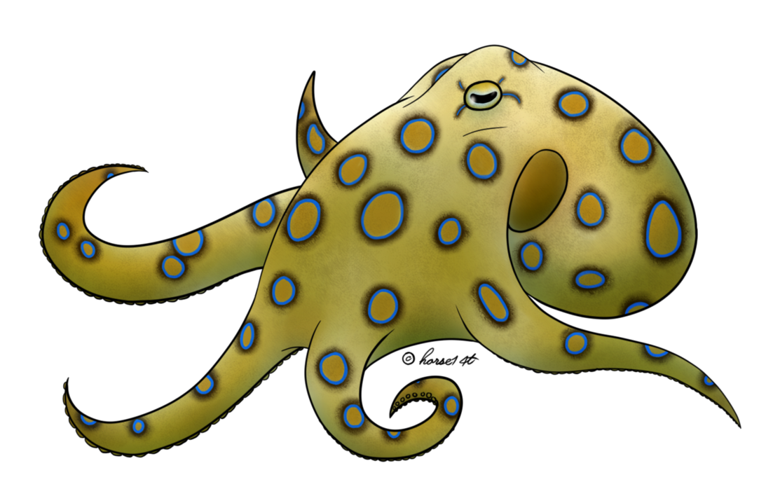 collection of drawing. Clipart octopus blue ringed octopus