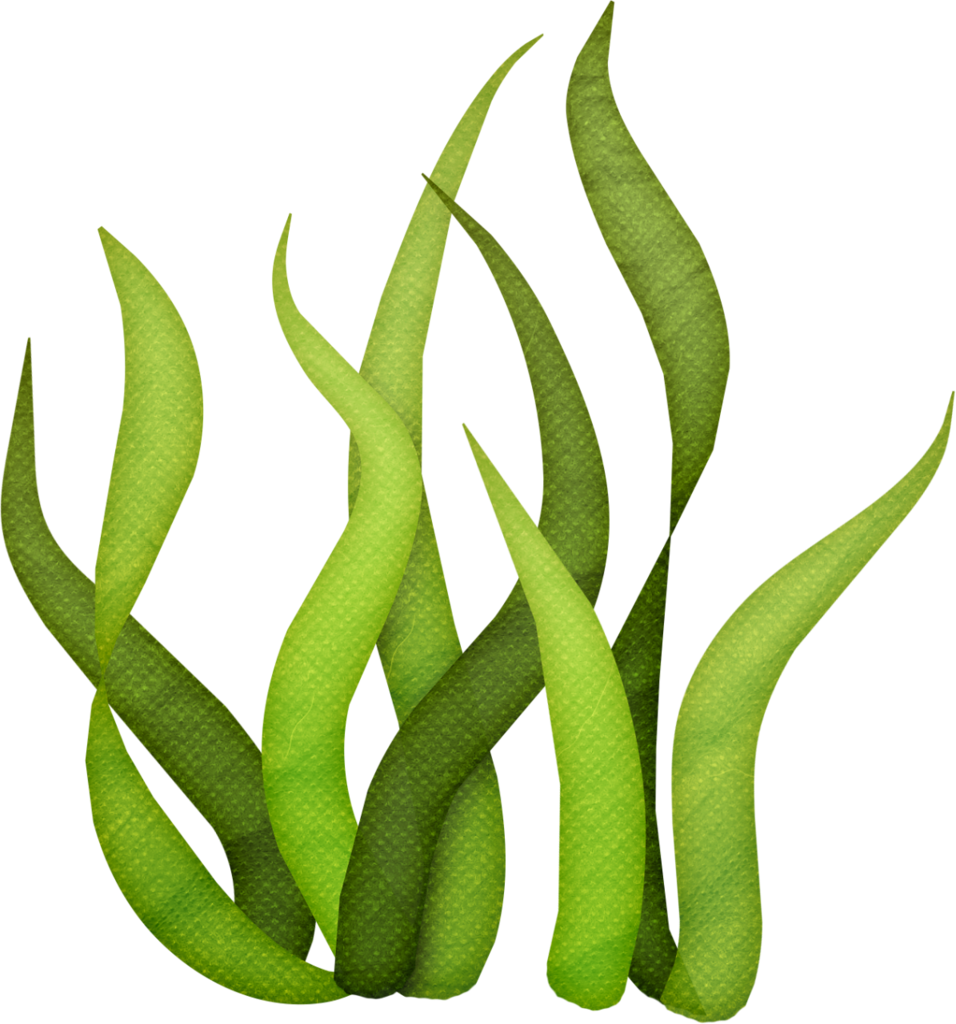 Nemo clipart octopus. Lliella bk underwater seaweeds