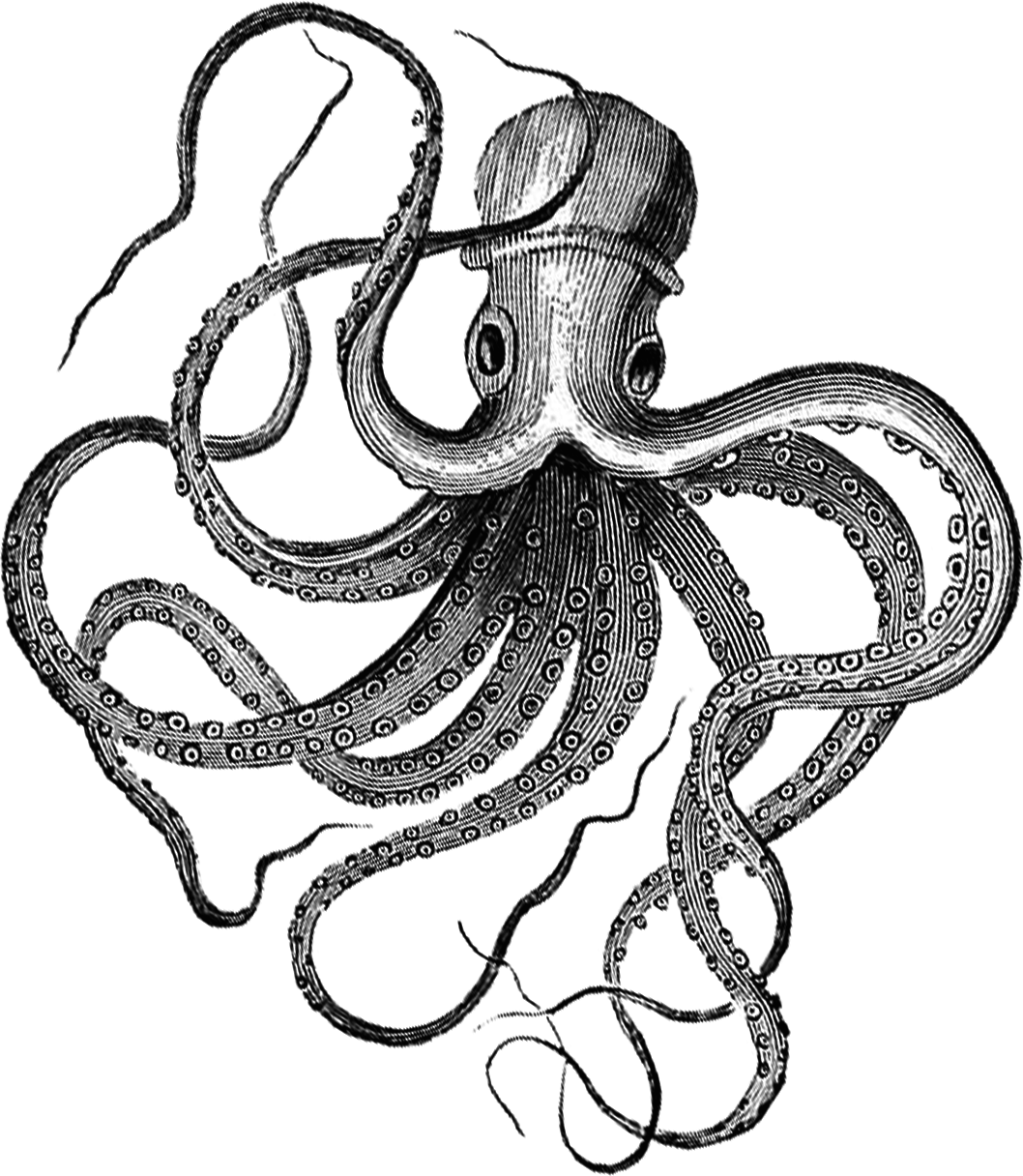 Clipart octopus mad. Ink drawing at getdrawings