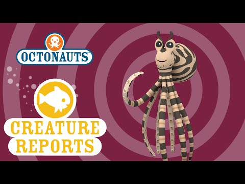 Octopus Images, Stock Photos & Vectors | Shutterstock