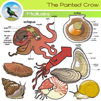 Clip art set octopus. Squid clipart mollusk