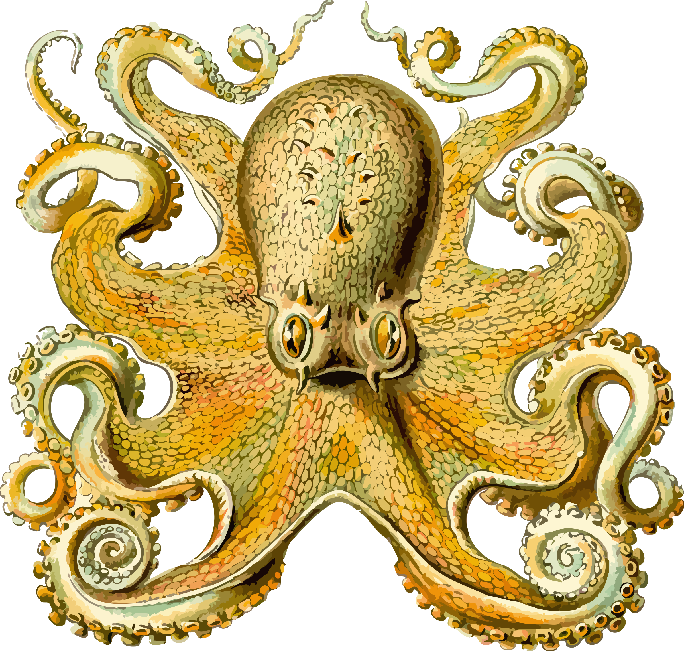 Icons png free and. Clipart octopus pdf