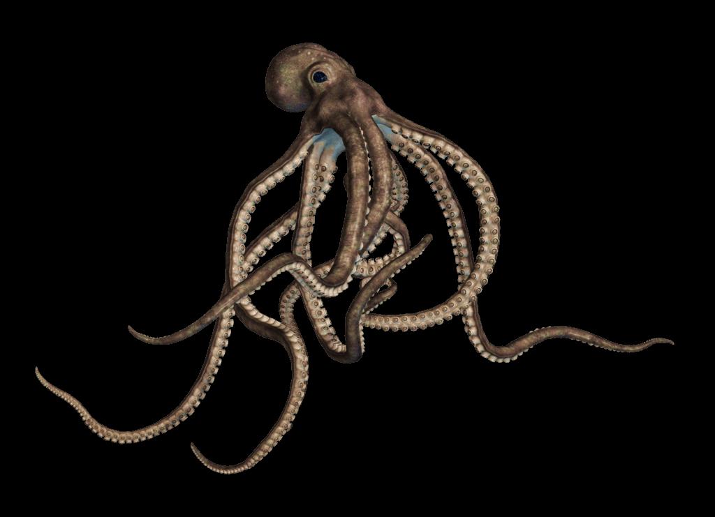 Clipart octopus transparent background. Large grey png stickpng